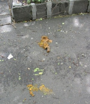 Squashed Dog Poo: Too-late